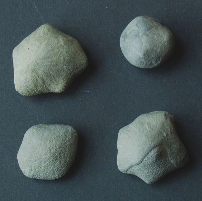 Locality: Teutonia, Misburg Diameters: max. 16 mm